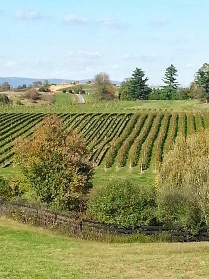 Barrel-Oak-Winery